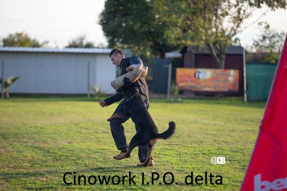 Cinowork I.P.O. Delta