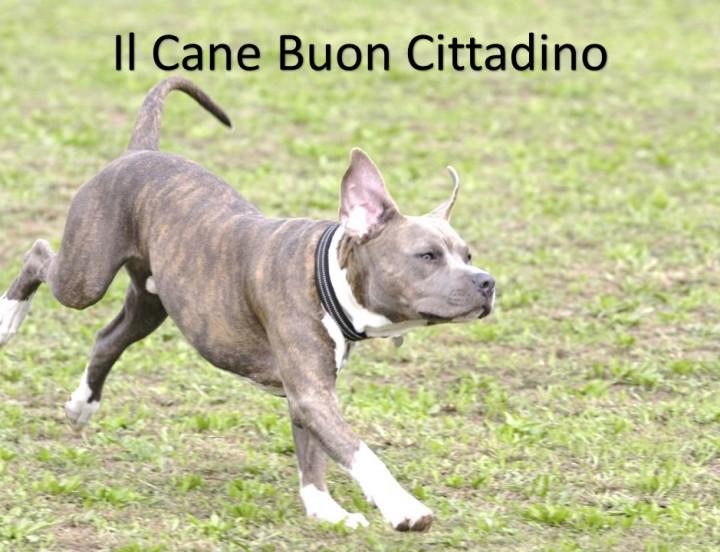 Il Cane Buon Cittadino