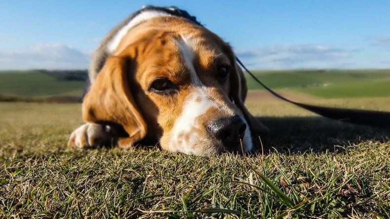 Lo Stress e il Cane