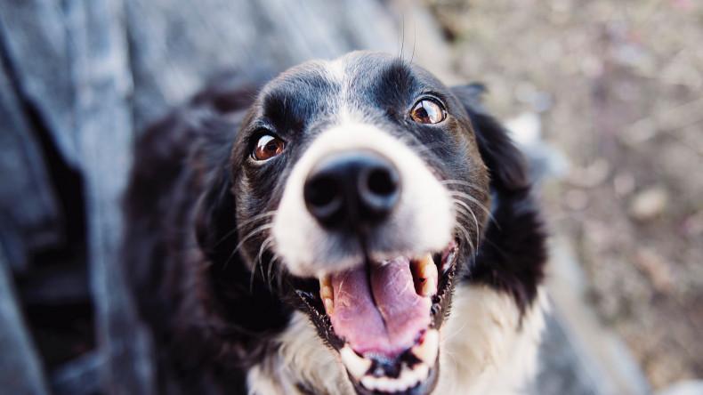 L'Universo Emotivo del Cane
